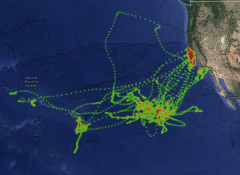 Animal track and oceanographic data overlays
